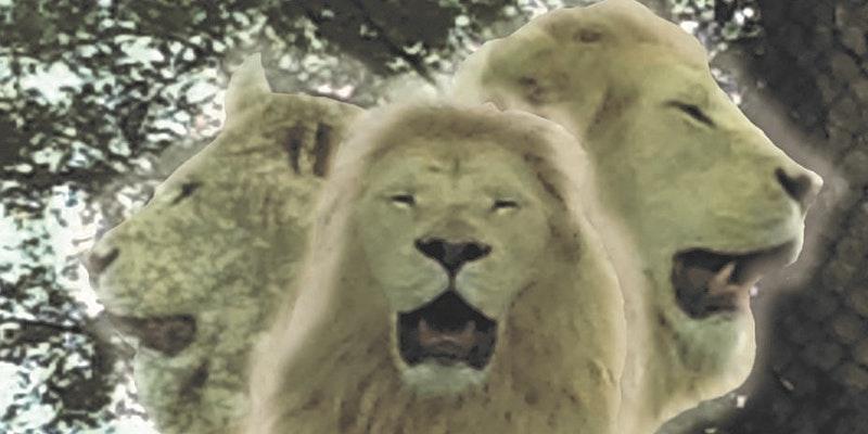 8-8 Lions Gateway